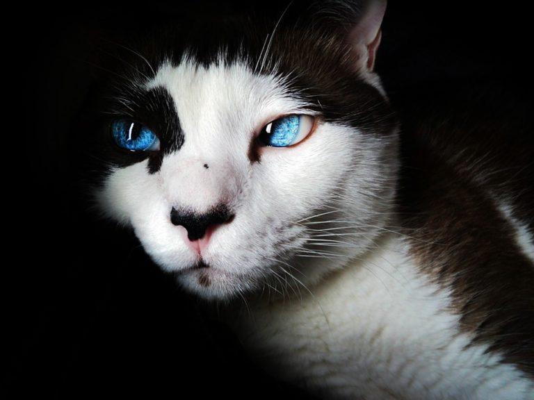 День попкорна и ответов кошкам: что йошкаролинцы могут отметить 22 января