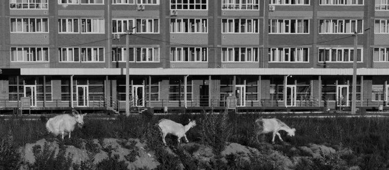 Все больше интересных работ поступает на фотоконкурс «Невероятная Йошкар-Ола»