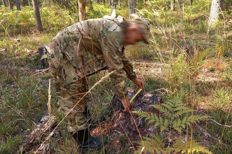 В Марий Эл злоупотребление лесом обернулось уголовными делами