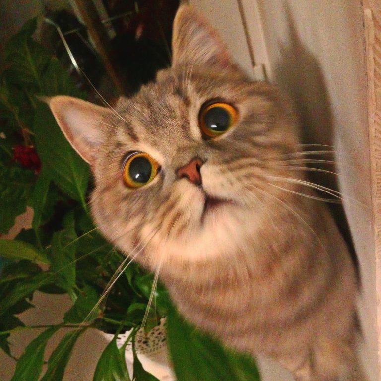 Йошкаролинцы активно принимают участие в фотоконкурсе «Йошкины кошки и не только…»